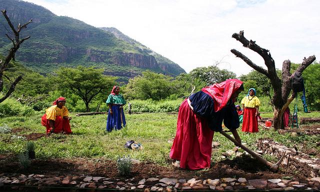 AMLO creará 128 coordinaciones indígenas en México (+VIDEO)