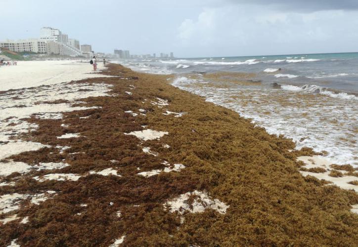 Emergencia en playas del Caribe mexicano por arribo inusual de sargazo