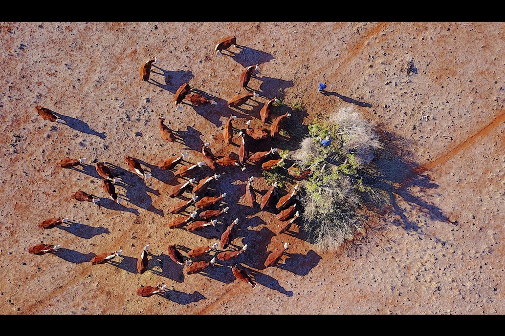 (Fotos) Impresionantes imágenes aéreas de cómo la sequía afecta la producción agrícola en Australia
