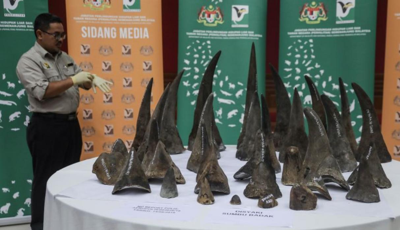 Incautan 50 cuernos de rinocerontes valorados en 12 millones de dólares