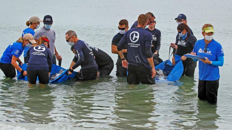 Dos orcas pigmeas fueron rescatadas en aguas del Golfo de México