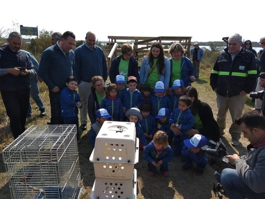 (Video) Especies de nutrias y aves fueron liberadas en río de Uruguay