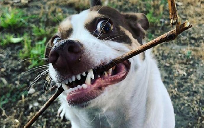 (Foto+Video) El perro que odia que lo besen es una estrella en las redes sociales
