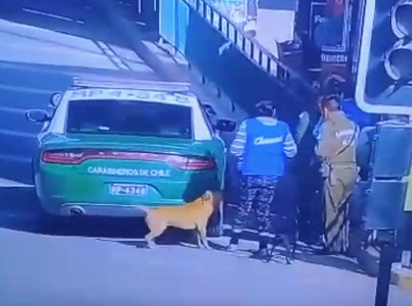 Presentan querella criminal contra carabineros que balearon a perro en Quilicura