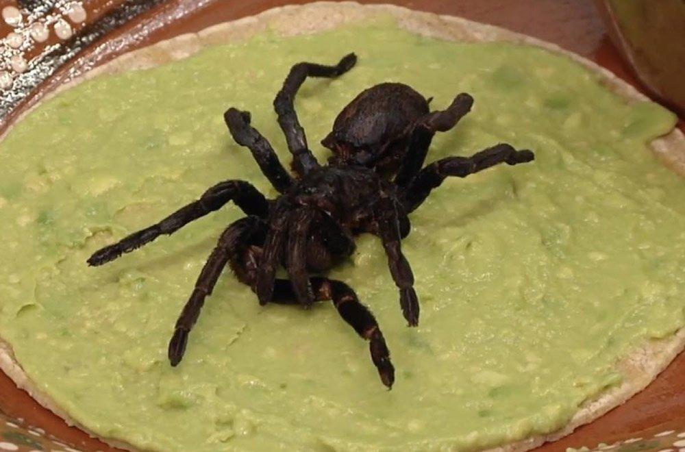 (Fotos) Restaurante mexicano ofrecía tacos de tarántulas en peligro de extinción