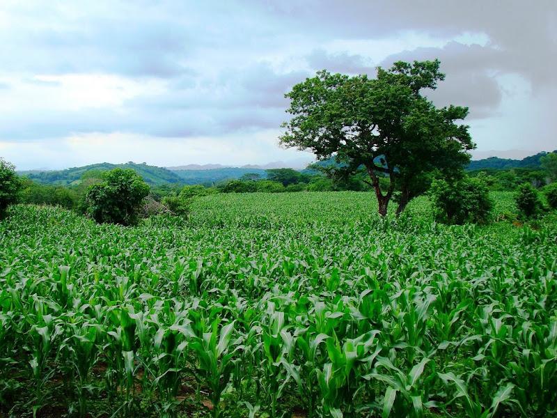 Venezuela: sindicato denuncia supuestos despidos masivos en Ministerio de Agricultura Productiva y Tierra