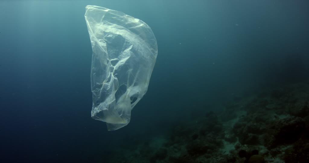 (Foto) Una especie marina prehistórica murió por comerse una bolsa plástica