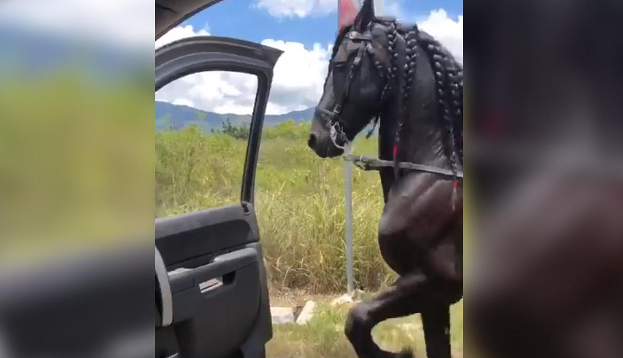(Video) Un caballo hace vibrar las redes sociales practicando el «Chona Challenge»