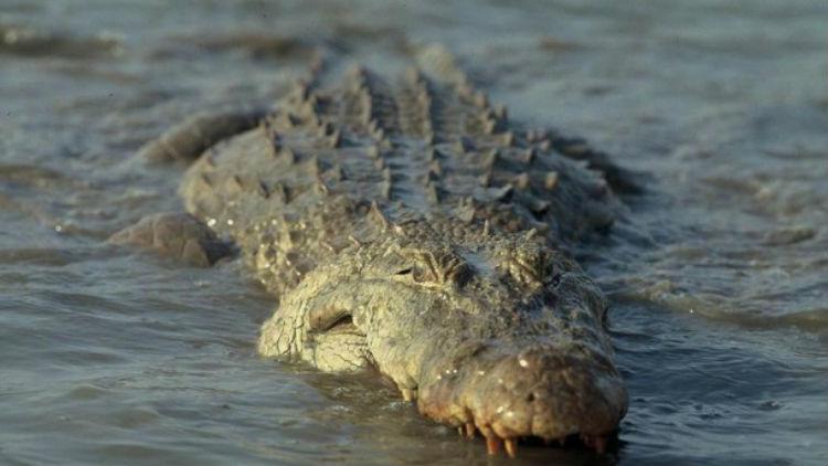 (Video) ¡Tremendo susto! Un cocodrilo ataca el bote de dos pescadores