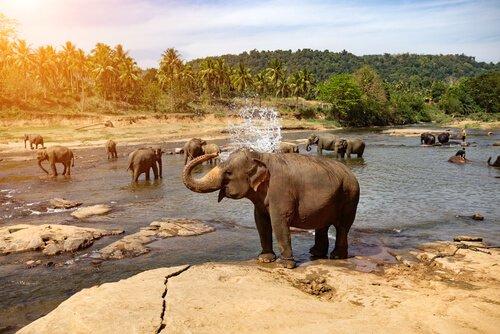 Matanza ilegal de elefantes en el Congo podrá evitarse en el futuro