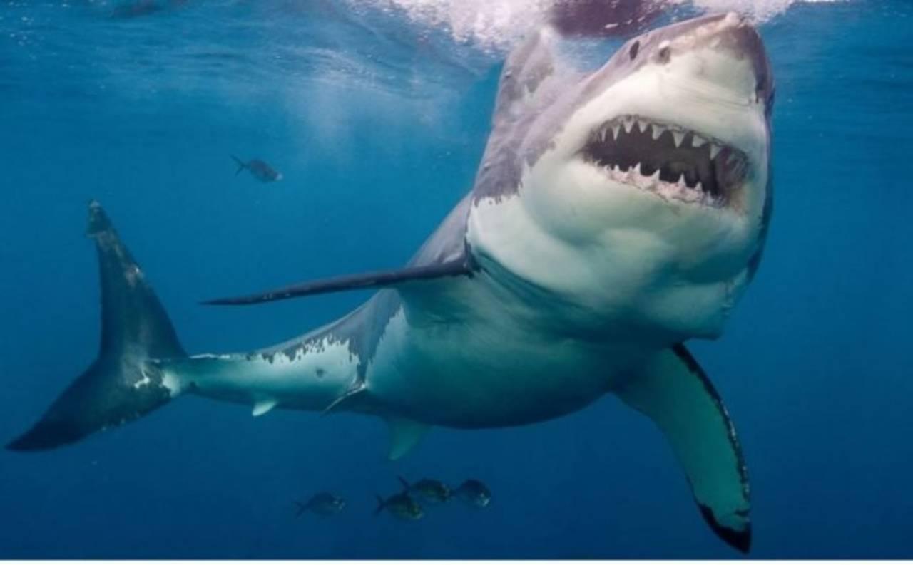 (Video) Saltó un metro fuera del agua: Tiburón ataca por sorpresa al científico que lo estudiaba