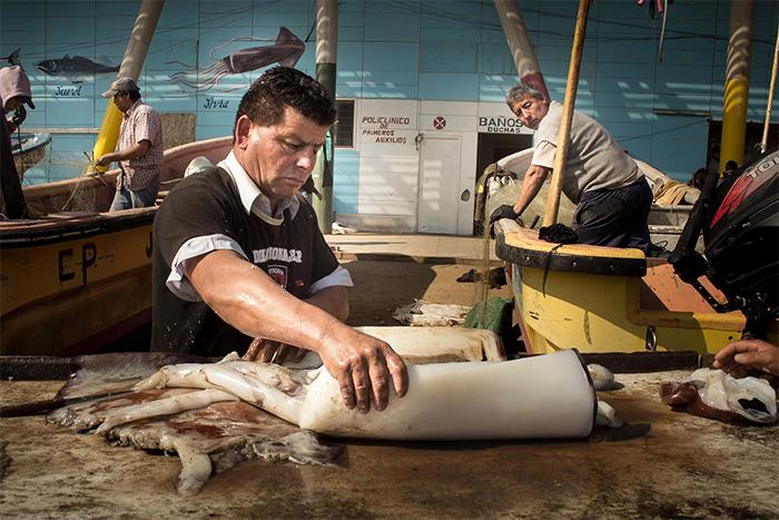 Pescadores artesanales acusan «inconsecuencia» de Agetremar por ponerse a favor de la pesca de arrastre de la jibia