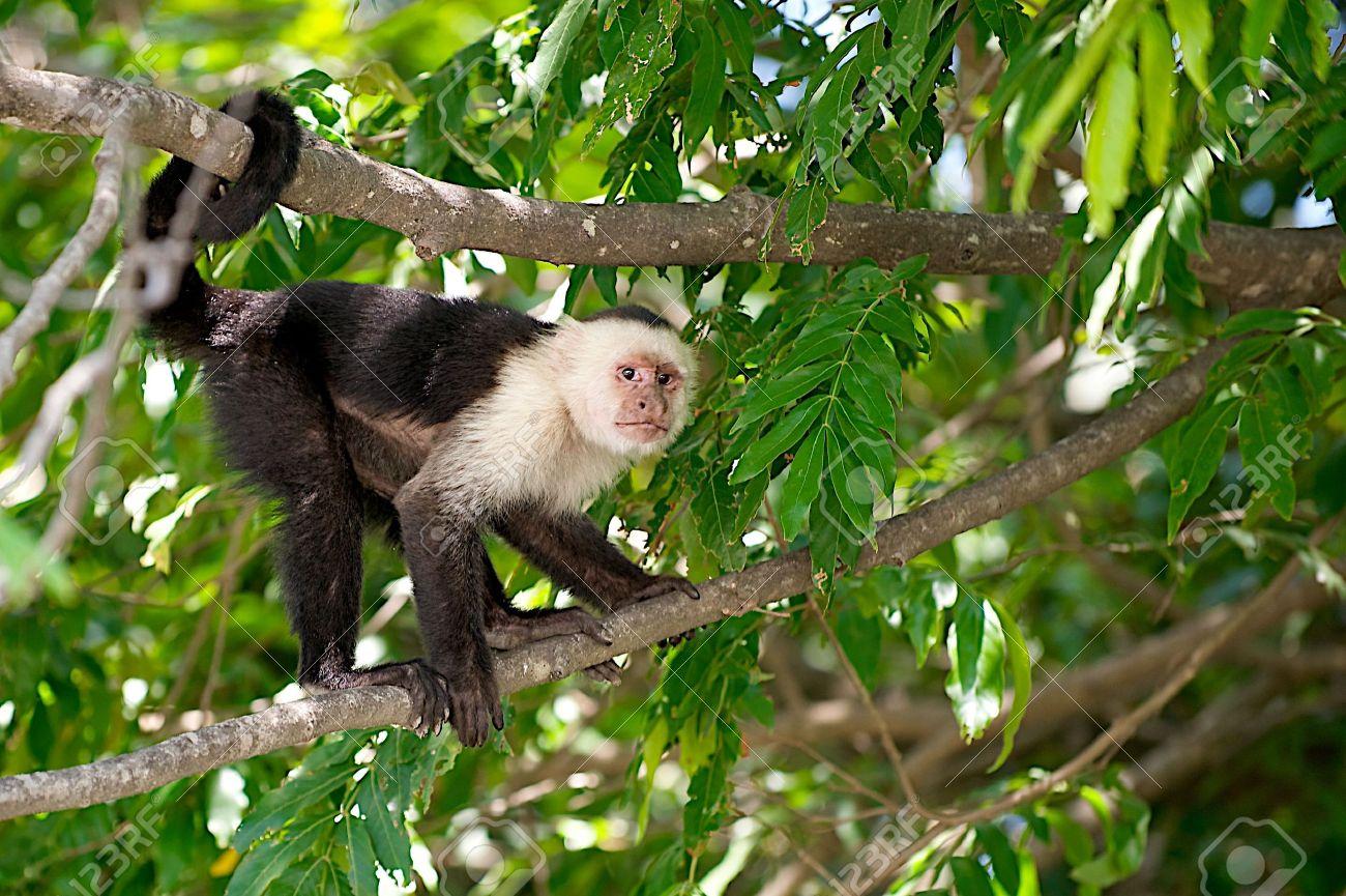 (Foto) La angustiosa imagen de una madre mono con su cría muerta en las manos