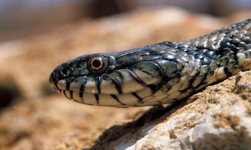 Atrapó a la serpiente que la mordió y se fue con ella hasta el hospital (+FOTOS)