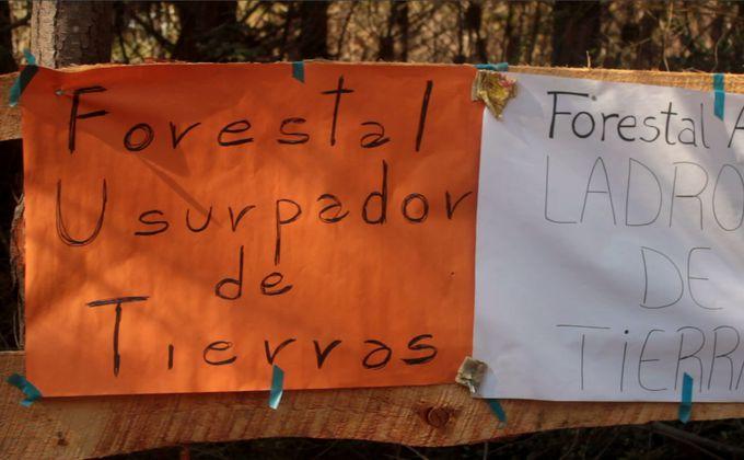 Justicia desestima apelación de Bosques Arauco y falla a favor de integrantes de recuperación territorial de Curanilahue