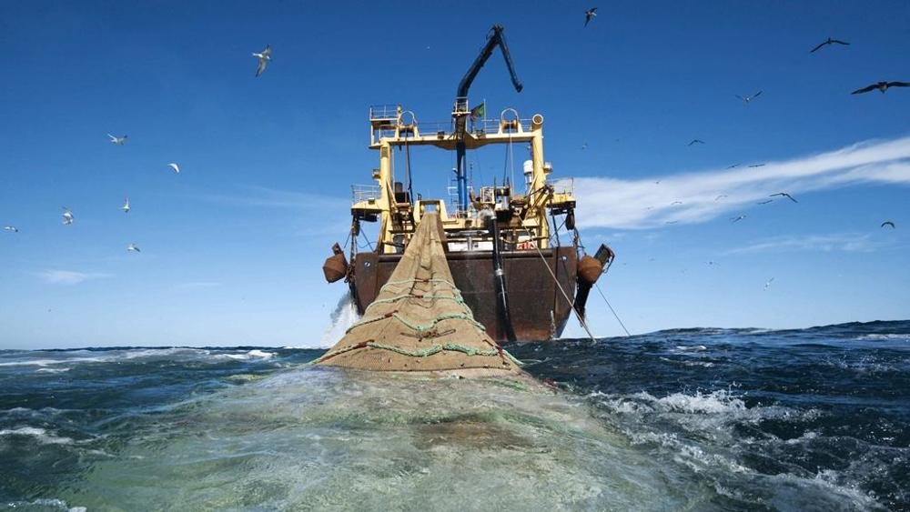 ONG Oceana celebra anuncio que restringe la expansión de la pesca de arrastre a nuevas zonas marítimas