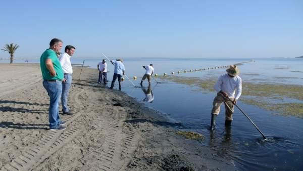 Brigadas de limpieza cuidan el ecosistema marino en las aguas de Los Urrutias