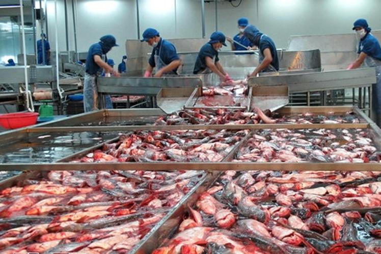 Exportación pesquera saca adelante la economía de Vietnam