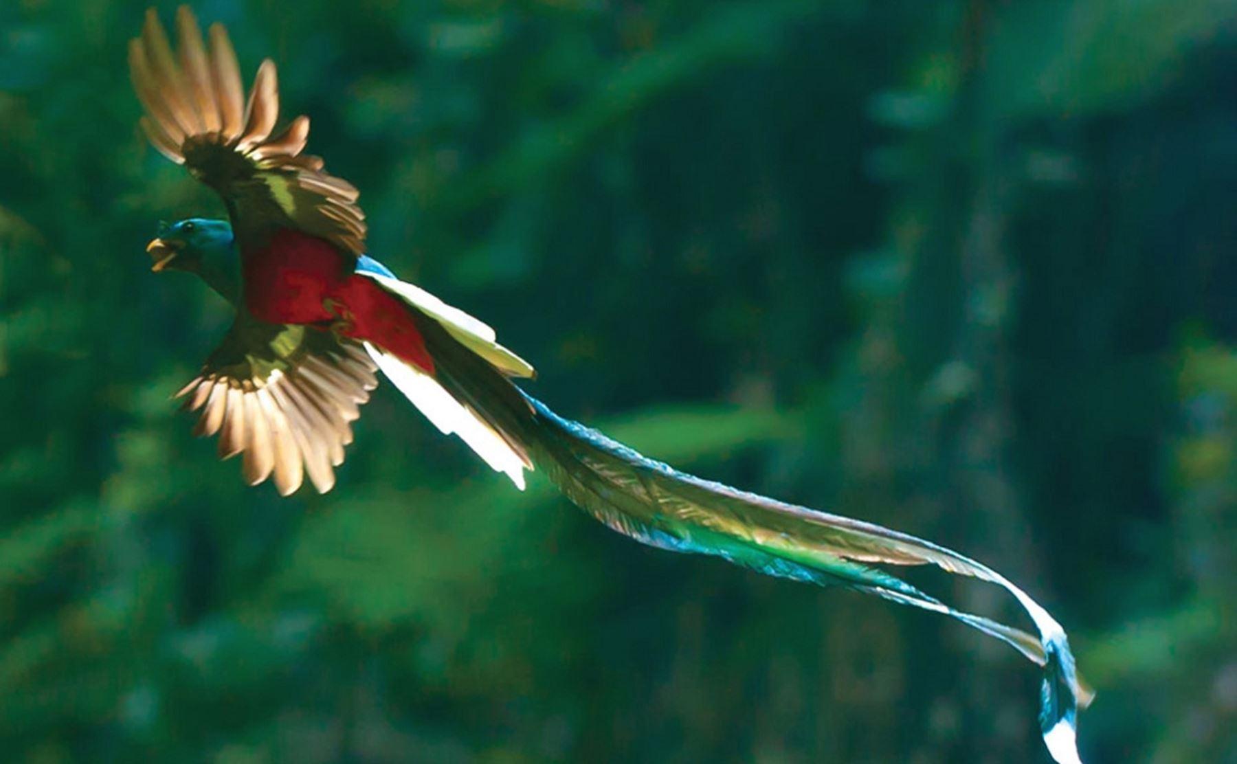 (Video) La serpiente emplumada inspira un largometraje a favor de la conservación ambiental