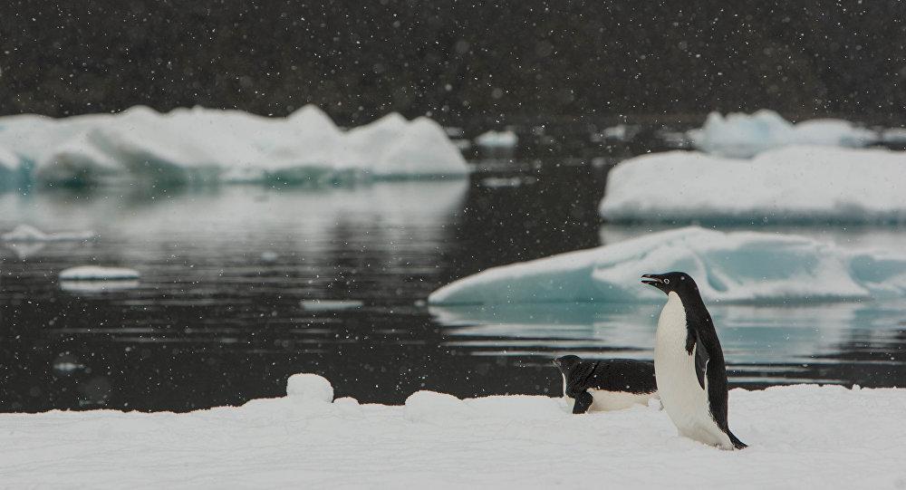 El cambio climático acaba con los pinguinos en la Antártida