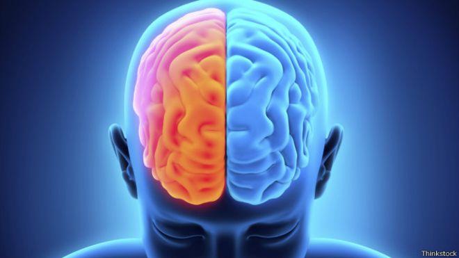 Científicos hallan conexión de túneles de la médula ósea con el cerebro