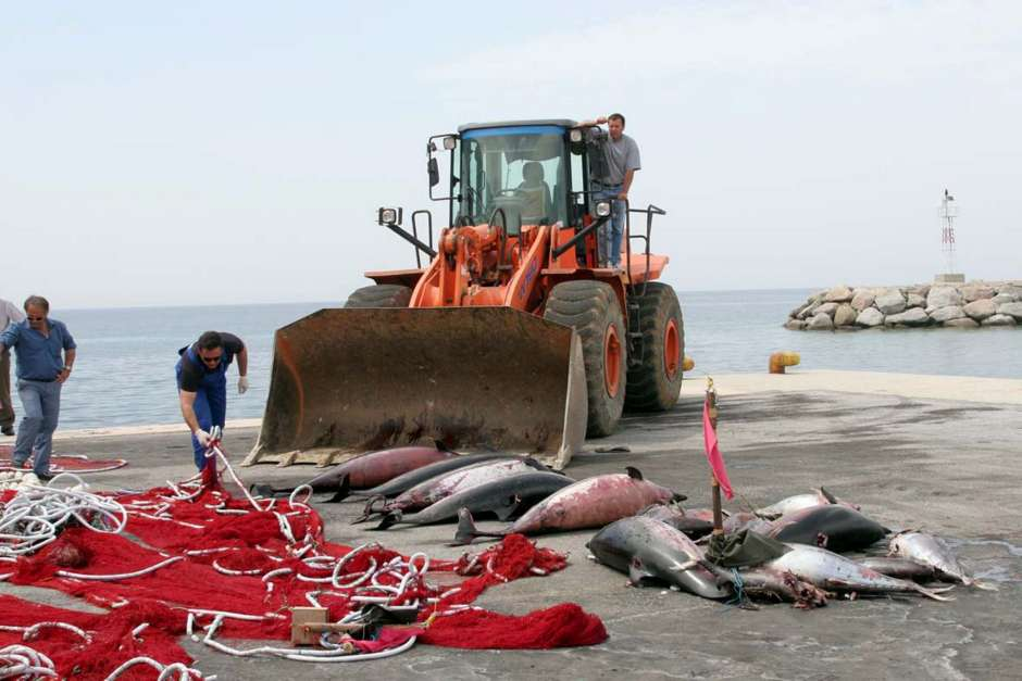 Marea roja ha dejado centenar de manatíes y delfines muertos
