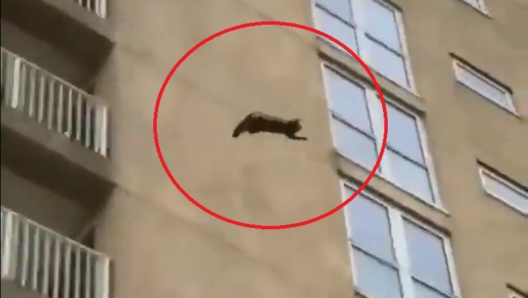 (Vídeo) Gato salta de un edificio y sobrevive al aterrizaje inesperado