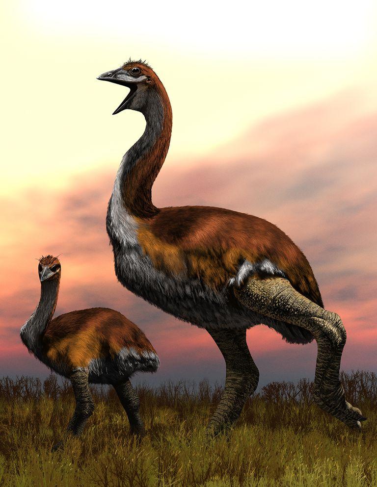 """Así ha sido llamada el ave más grande del mundo """"Vorombe titan"""""""