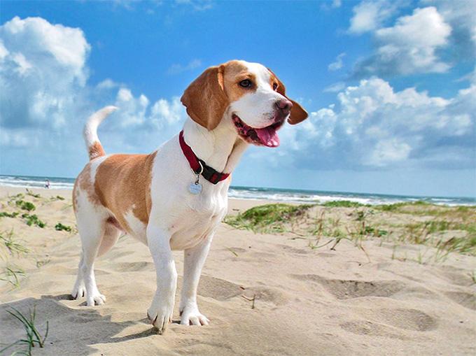 (Foto) La imagen de un perro sonriente aparece en los rayos X de un paciente con cáncer
