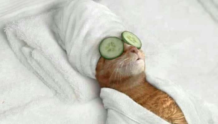 Inauguraron en Italia hotel cinco estrellas para gatos