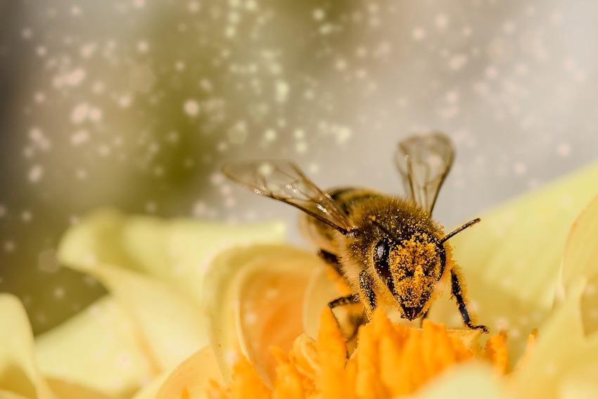 Las abejas deben visitar dos millones de flores para producir dos kilos de miel