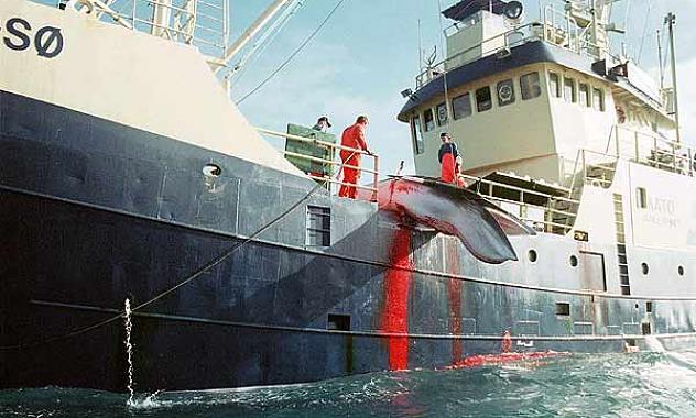 Japón cazó este año más de 50 ballenas en aguas protegidas de la Antártida