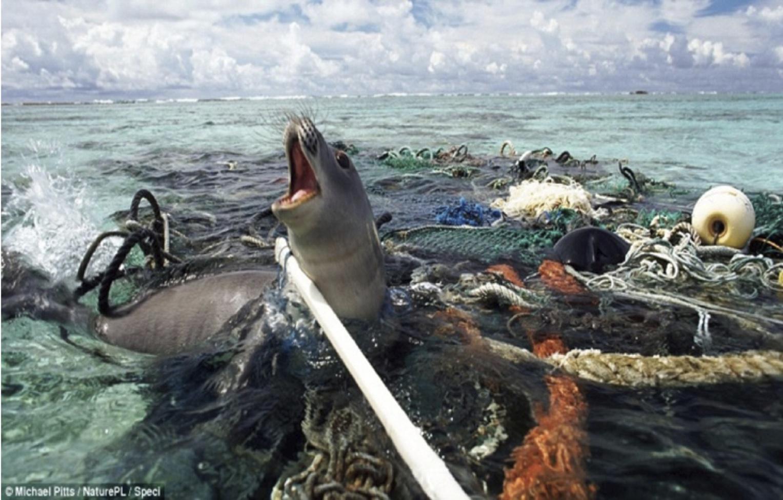 Tres de cada cien cetáceos mueren a consecuencia de comer desechos plásticos