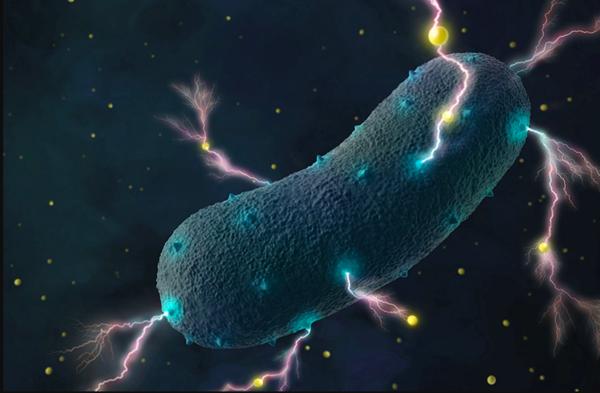 Sorprendente: las bacterias de los intestinos producen electricidad