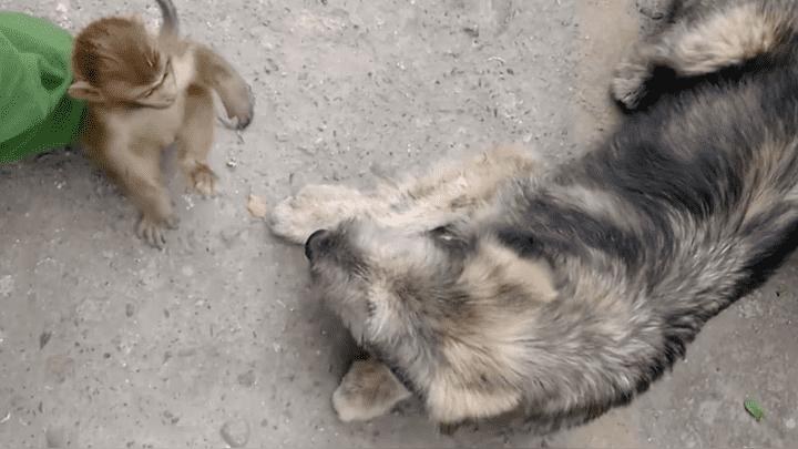 (Video) ¡Indignante! Grabó pelea de su perro con un mono bebé y generó la furia de los usuarios