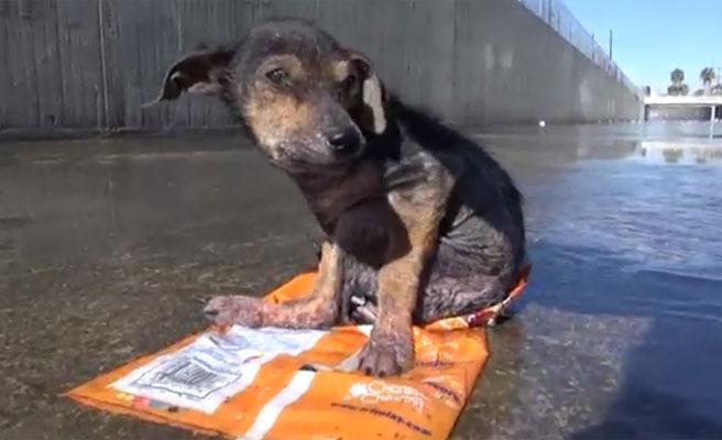 (Video) Héroe: Arriesgó su propia vida para salvar un cachorro