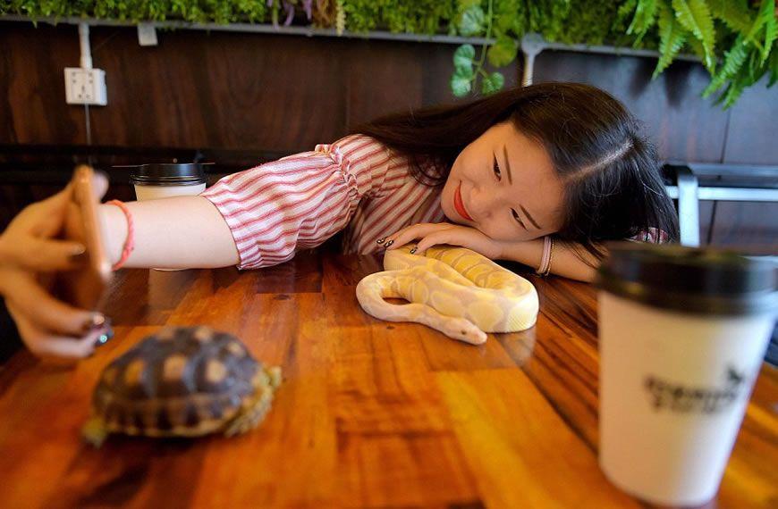(Fotos) Una serpiente se tomará un café contigo en este curioso lugar en Camboya