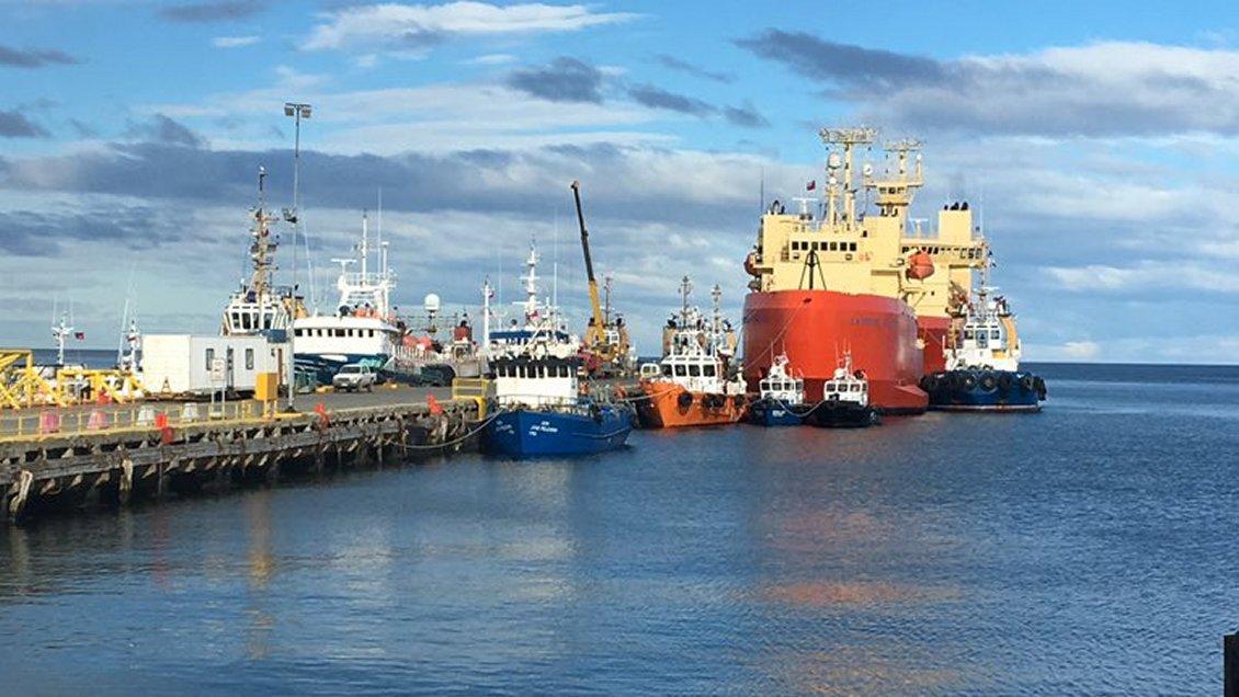 Acusan a industria salmonera por graves daños a la flora y fauna marina en Magallanes