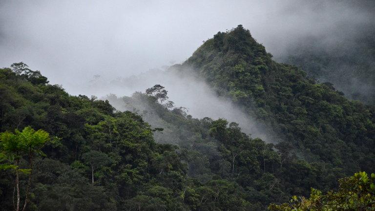 Andes occidentales de Colombia, una esperanza para la supervivencia del reino animal