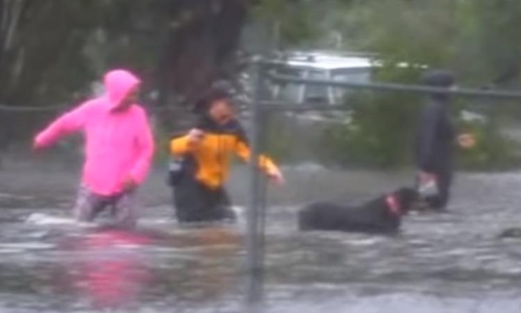 (Video) Una reportera interrumpe su noticia para rescatar a un perro de una inundación