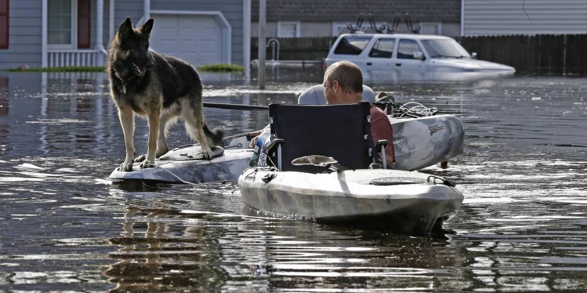 (Fotos) Rescates de animales durante el huracán Florence