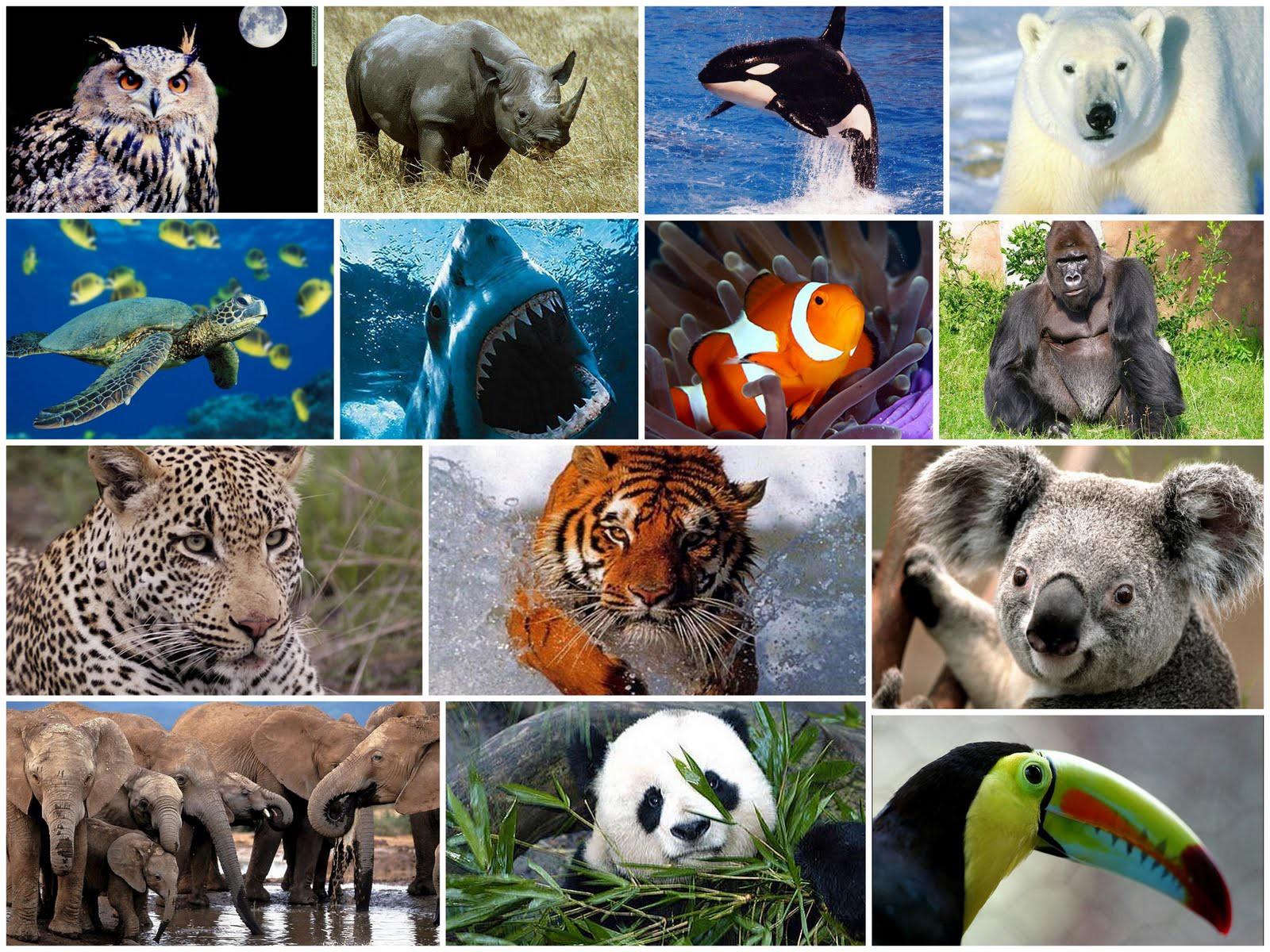 (Video) La Tierra perdió el 60% de sus animales salvajes en 44 años