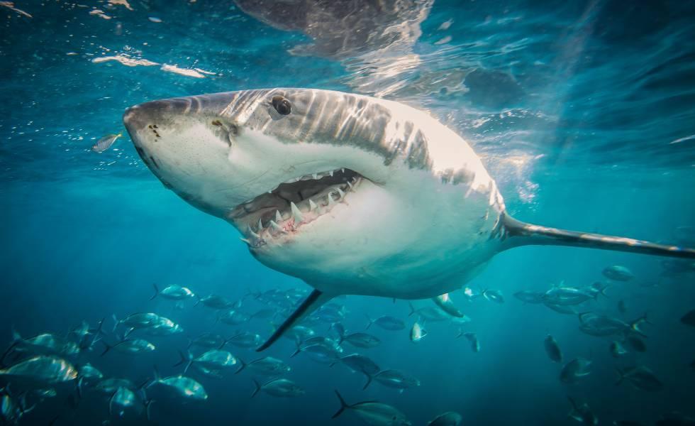 """(Video) Por """"cortar camino"""" cayó en un acuario con tiburones que iban a ser alimentados"""