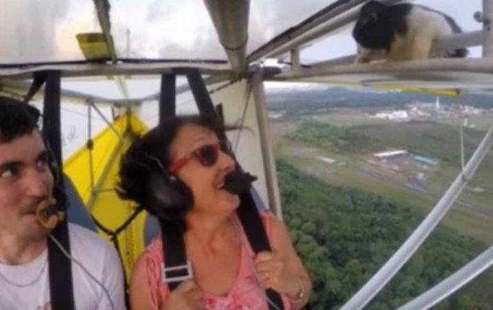 (Video) Un gato aparece en un ala de una avioneta mientras volaba