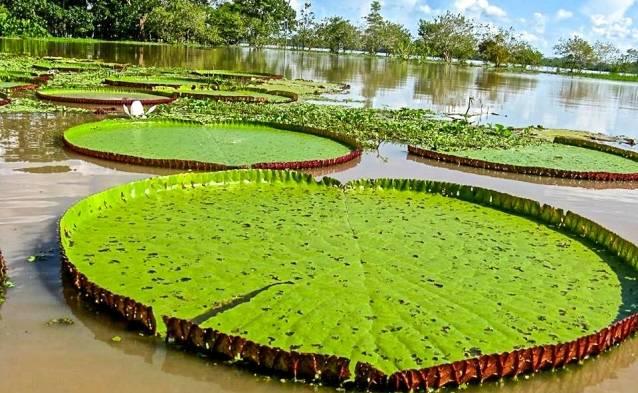 Financiarán proyectos productivos indígenas en la Amazonía colombiana