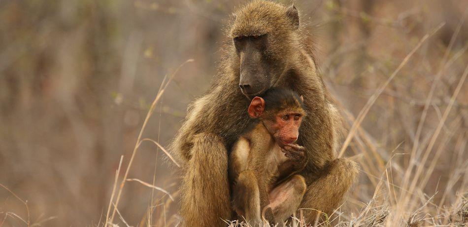 "Un inhumano ""cuidador"" de fauna mató a 14 animales salvajes"