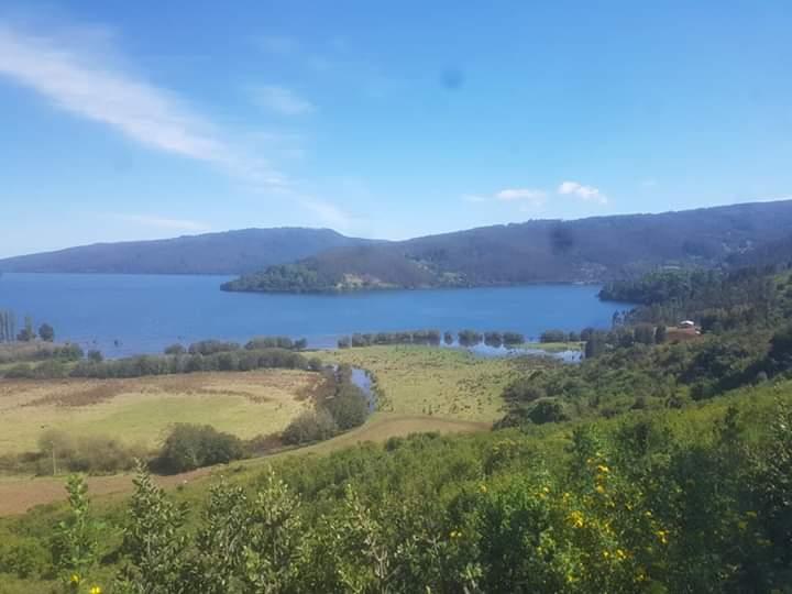 Empresa Forestal Celco restituirá 97 hectáreas de terreno a comunidad mapuche en Contulmo
