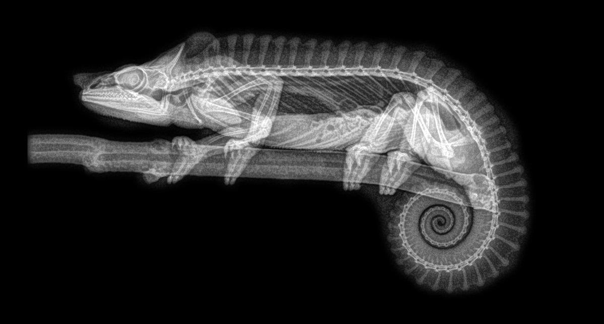 (Fotos) Cinco impresionantes radiografías de animales