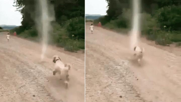 (+Video) Enfrentamiento inesperado de un perro con un tornado