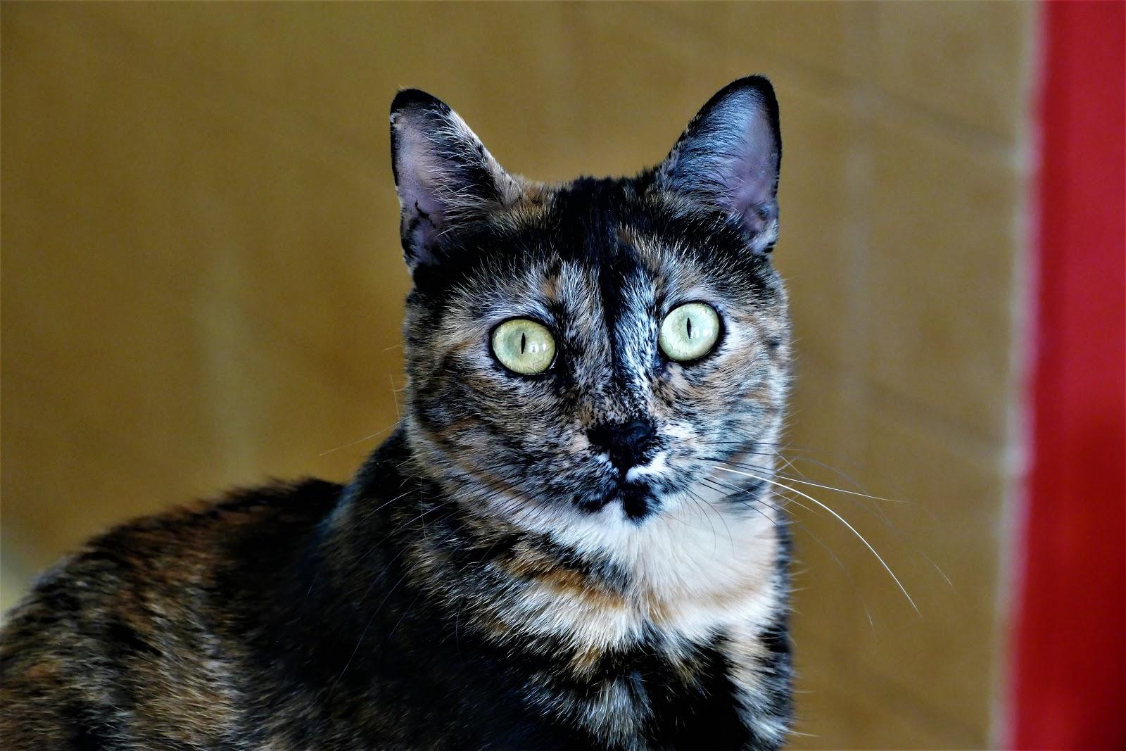 «Gatos polizontes» fracasan en su misión de cazar ratas gigantes en Nueva York